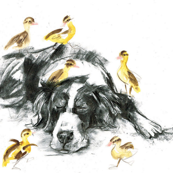 border collie with ducklings laura mckendry