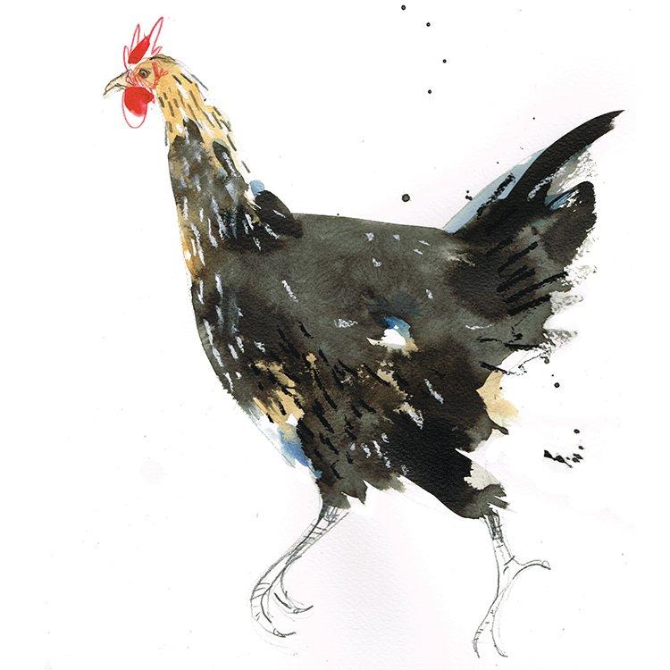 black hen running