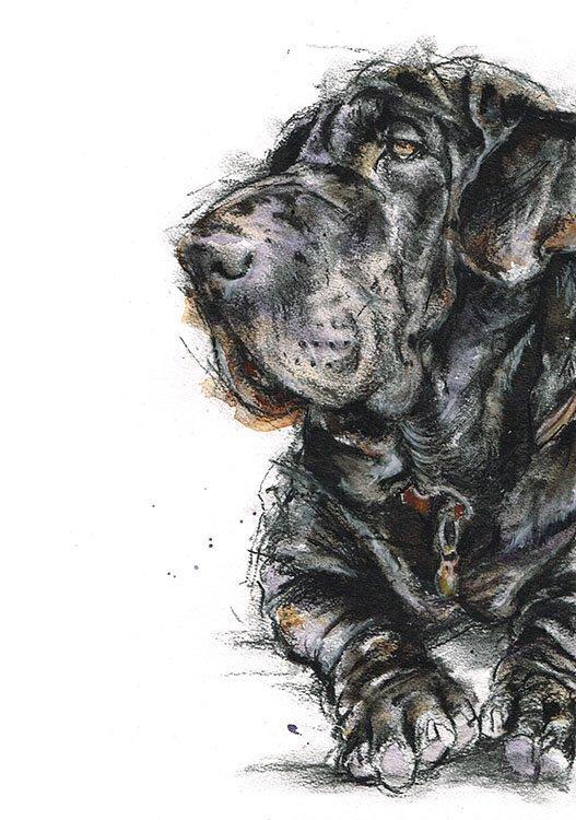 Shar pei x bassett hound