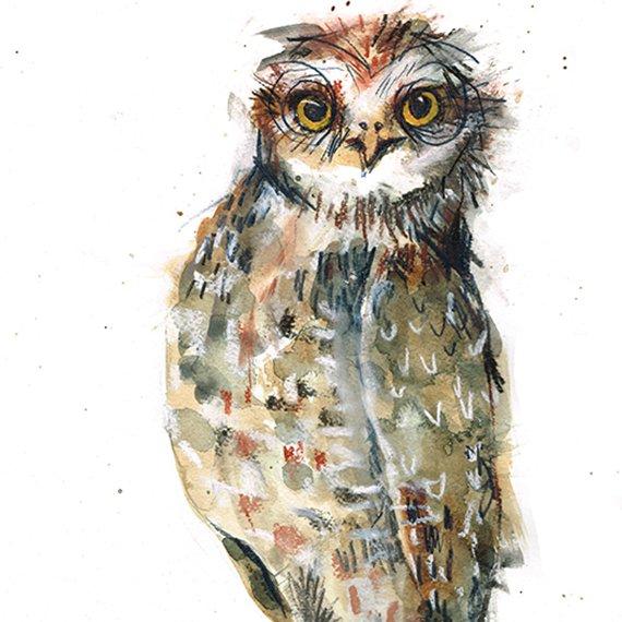 hauty owl