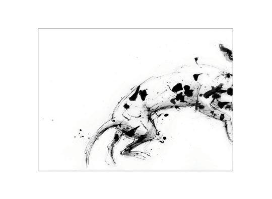 Leaping dalmatian card laura mckendry
