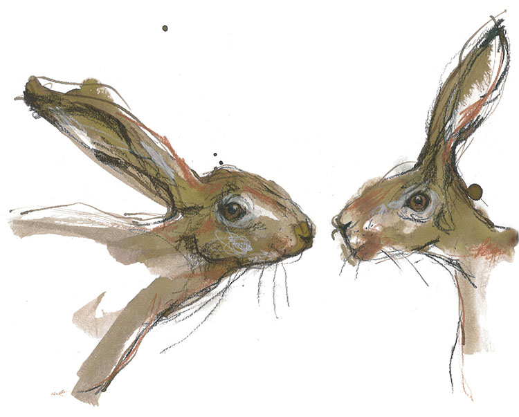 pair of hares