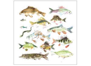 Freshwater fish laura mckendry