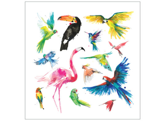 Tropical birds laura mckendry