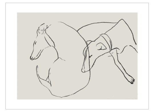 Whippets laura mckendry