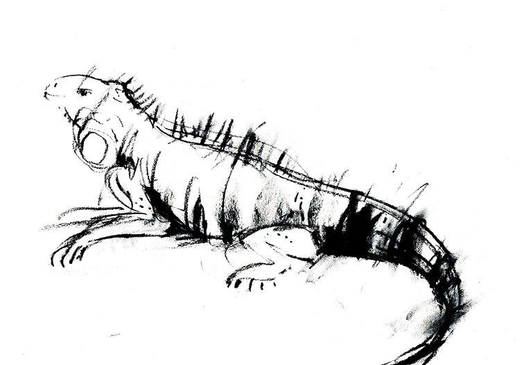Lizard II