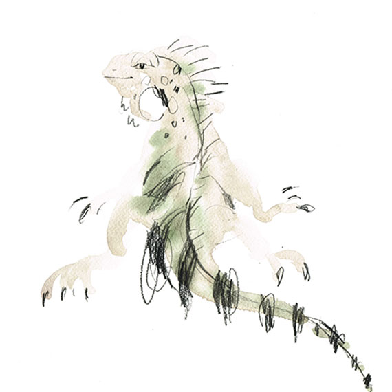 Lizard III
