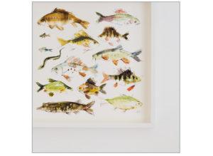 Freshwater fish
