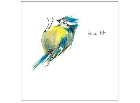 Blue tit laura mckendry