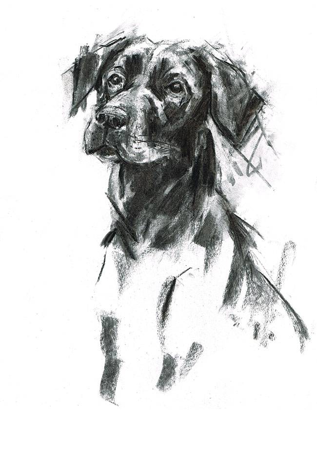 Poppy black labrador charcoal laura mckendry