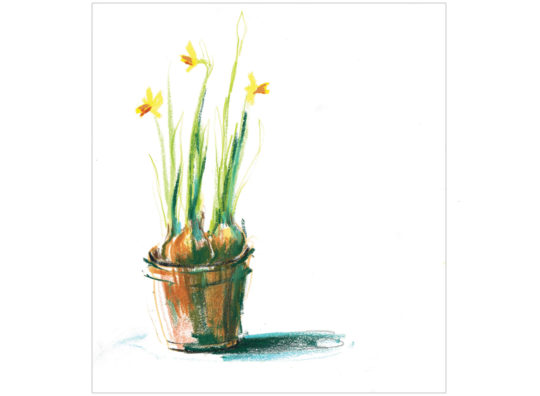 daffodils in pot laura mckendry