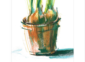 daffodils in pot close up laura mckendry
