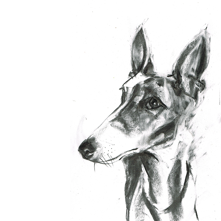 whippet dog portrait laura mckendry