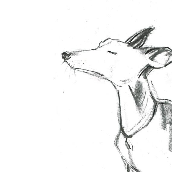 whippet dog portrait laura mckendry