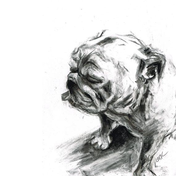 english bulldog dog portrait laura mckendry