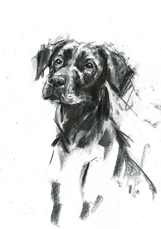 black labrador dog portrait laura mckendry