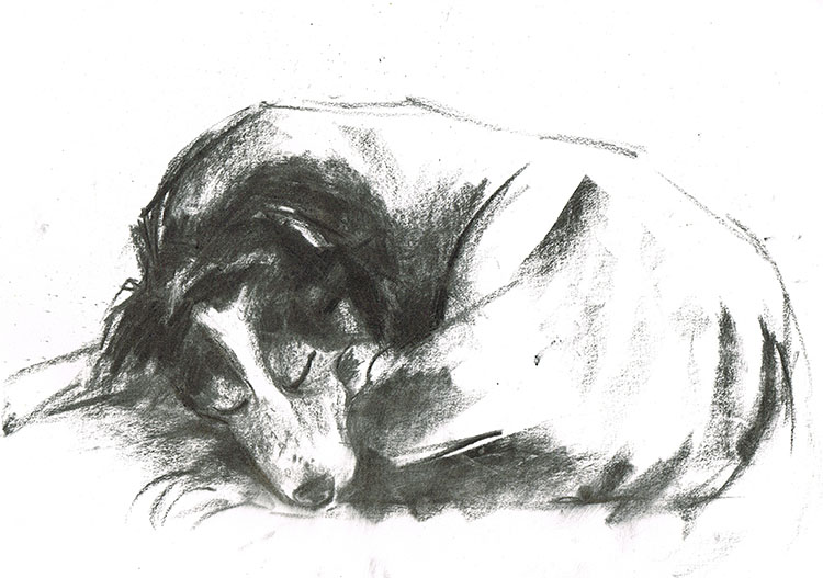 border collie sleeping dog portrait laura mckendry