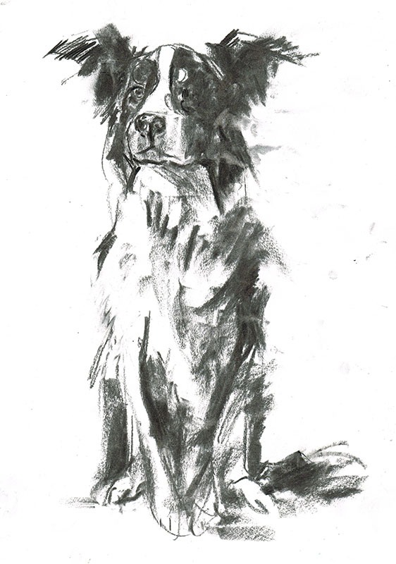 border collie dog portrait laura mckendry