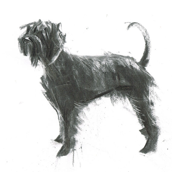 giant schnauzer dog illustration laura mckendry