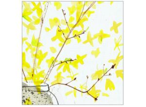 forsythia illustration laura mckendry