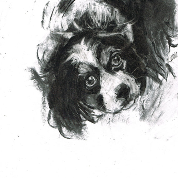 king charles spaniel dog portrait laura mckendry