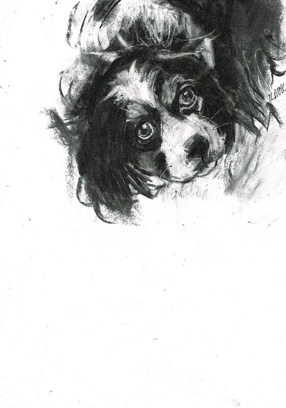 king charles spaniel dog portrait laura mckendry