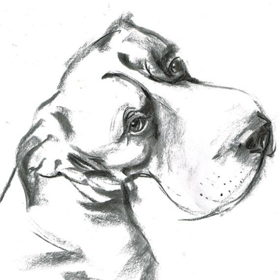 great dane boxer dog illustration laura mckendry