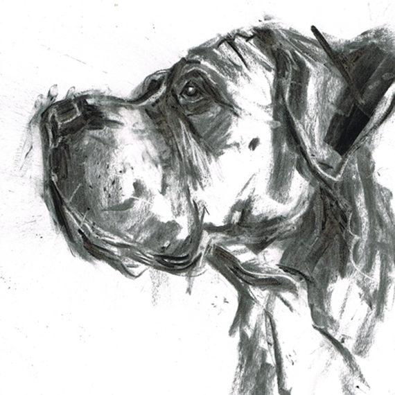 great dane boxer dog portrait laura mckendry