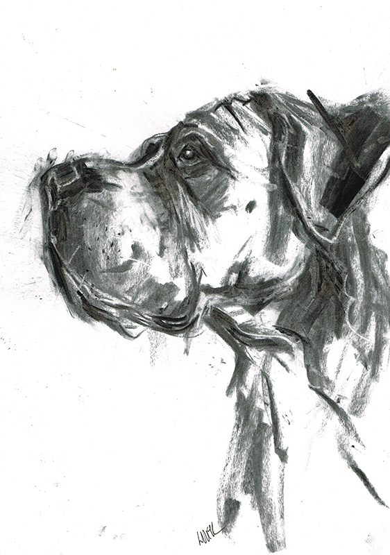 great dane boxer dog portrait laura mckendry