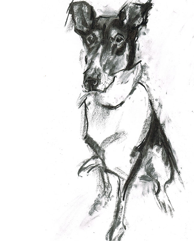 dog portrait laura mckendry