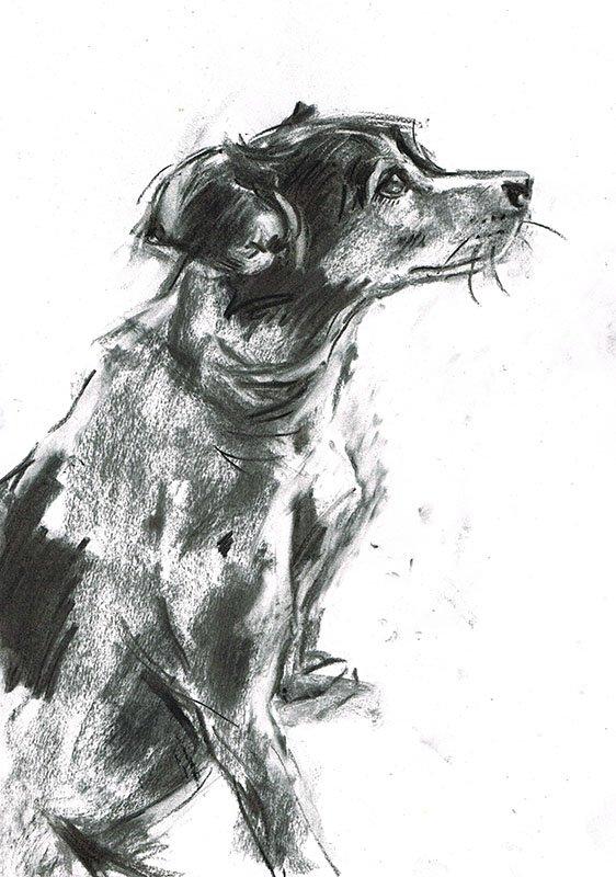 jack russell dog illustration laura mckendry