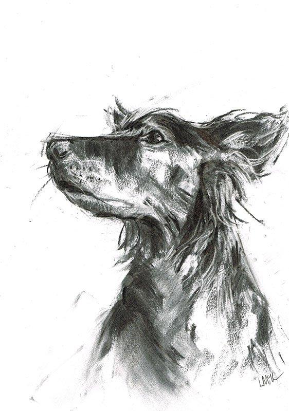 toller dog portrait laura mckendry