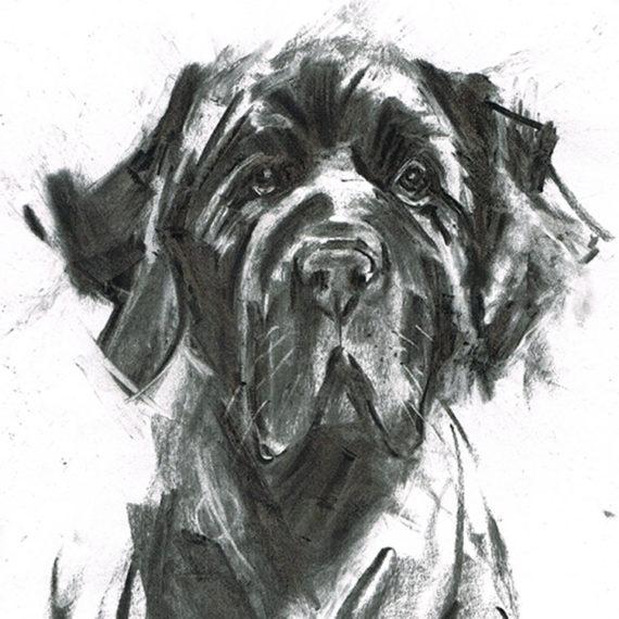 newfoundland dog illustration laura mckendry