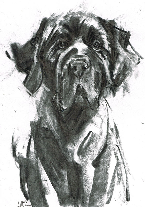 newfoundland dog illustration laura mckendry