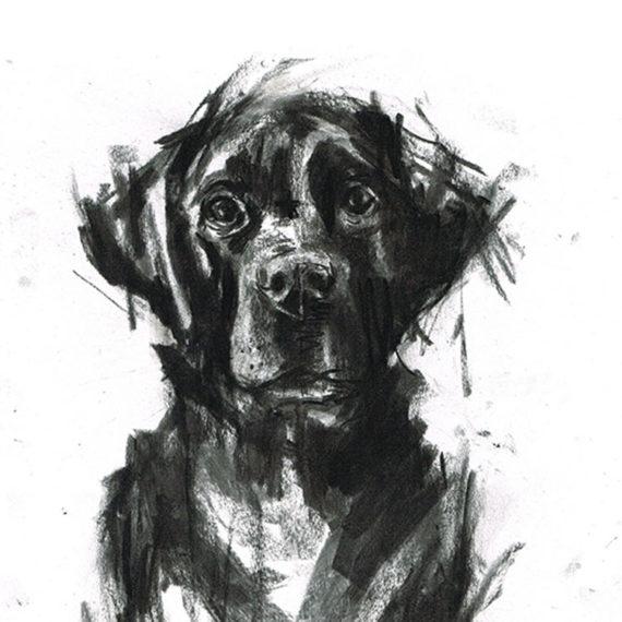 black labrador illustration laura mckendry