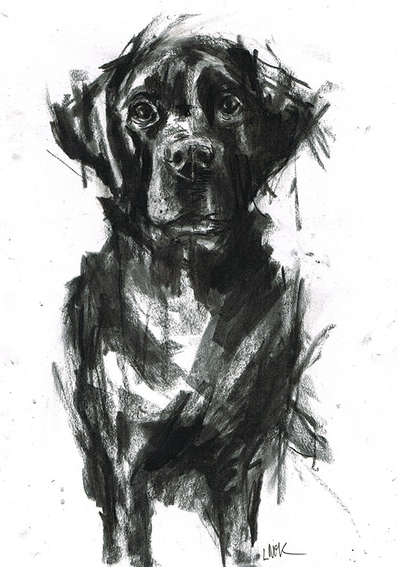 black labrador illustration laura mckendry