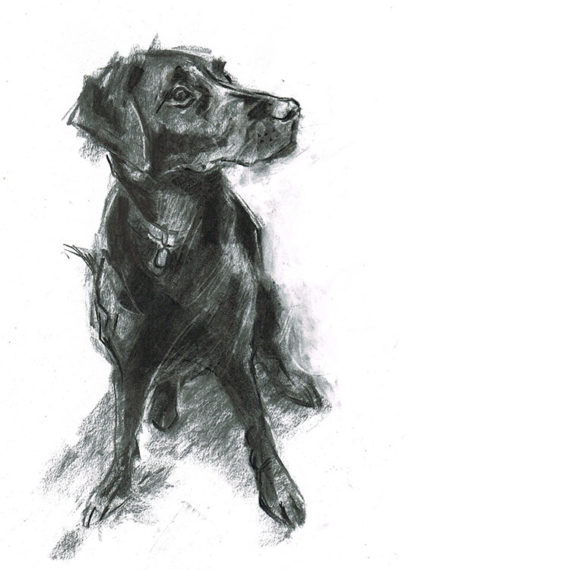 black labrador dog portrait laura mckendry