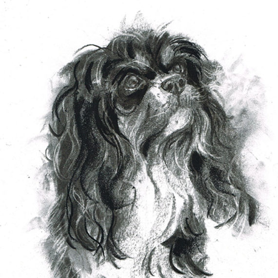 cavalier king charles spaniel dog portrait laura mckendry