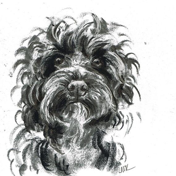 cockapoo dog illustration laura mckendry
