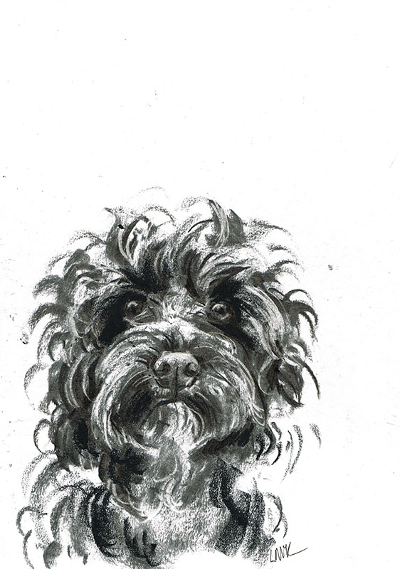 cockapoo dog illustration laura mckendry
