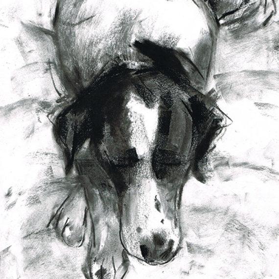 pointer mix dog illustration laura mckendry