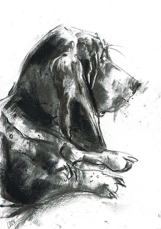 bassett hound dog illustration laura mckendry