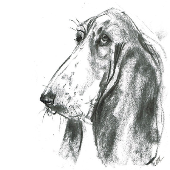 bassett hound dog illustration laura mckendry