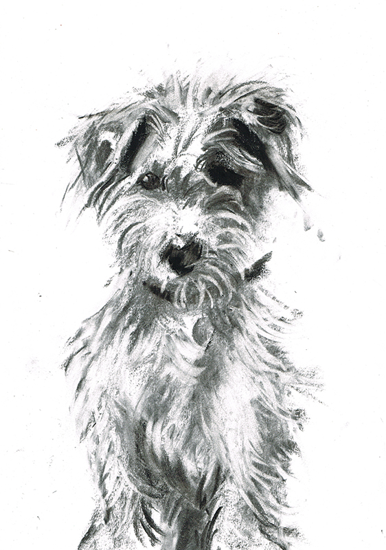 jack russell illustration laura mckendry