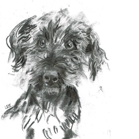 Spud - belington terrier cross laura mckendry