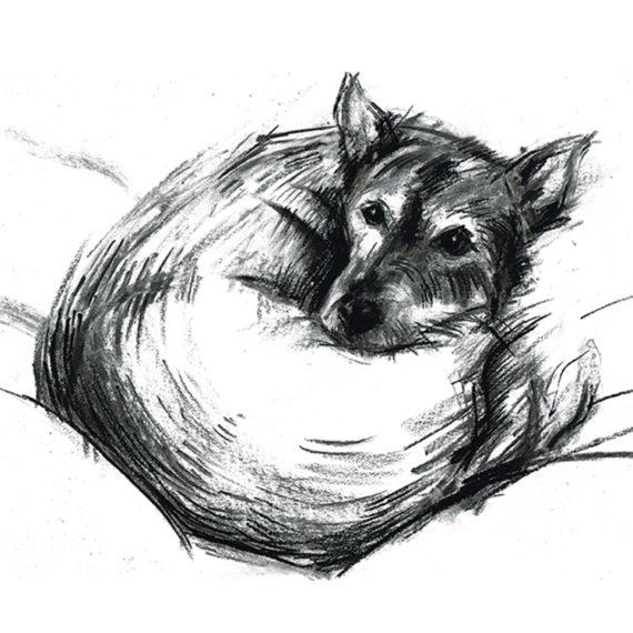 Sunia - mix fox terrier - laura mckendry sq