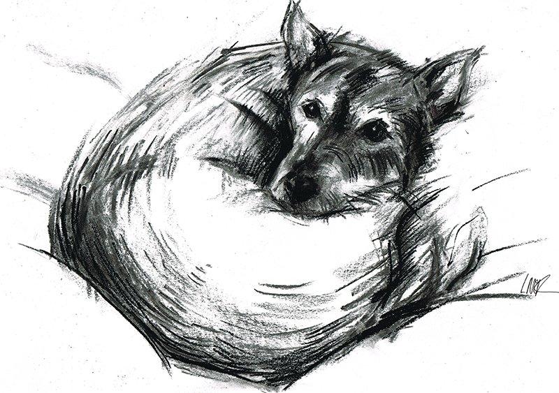 Sunia - mix fox terrier - laura mckendry