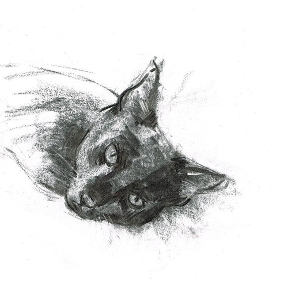 buddy cat - laura mckendry