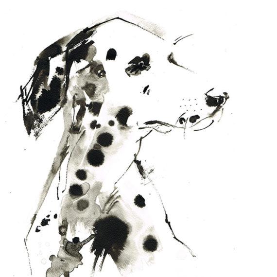 dalmatian laura mckendry sq