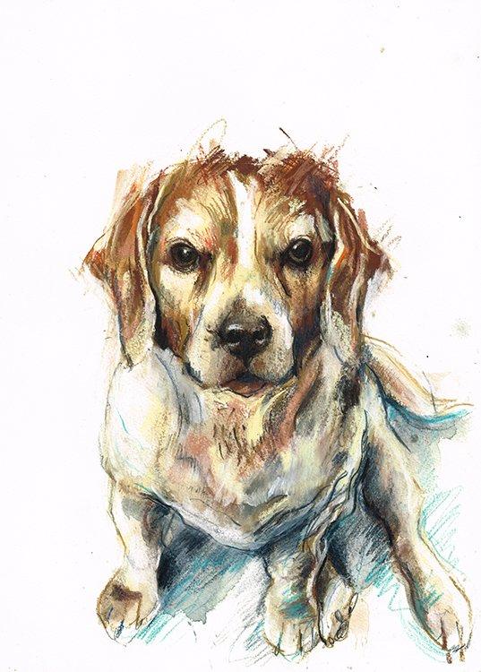 paddy beagle laura mckendry